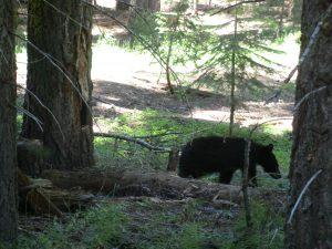 Der kleine, unbeeindruckte Bär
